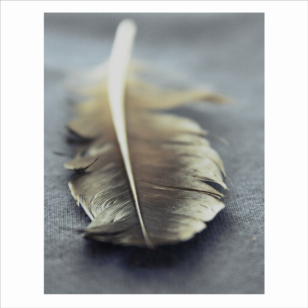 Portrait of a feather 3.jpg