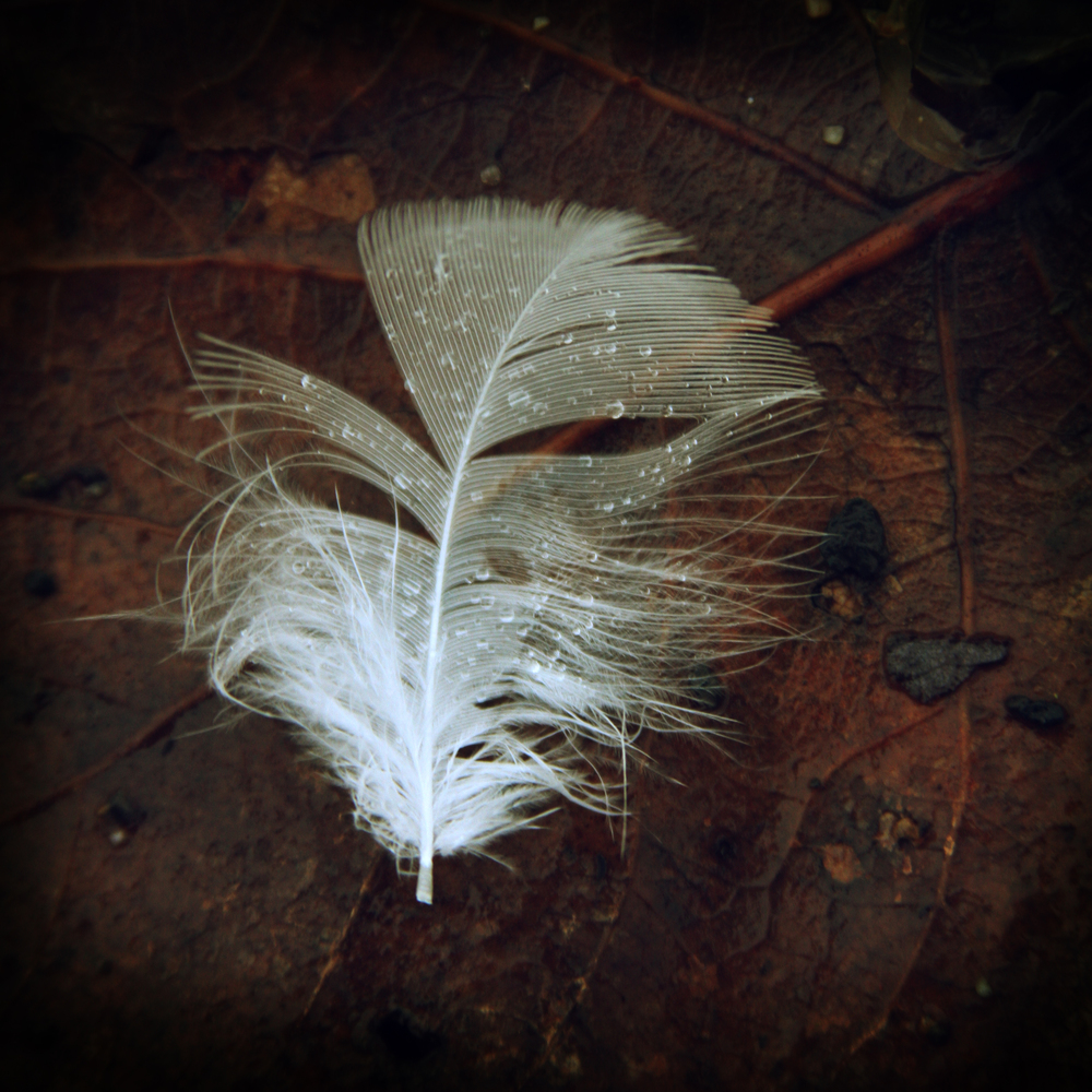 Portrait of a feather.jpg
