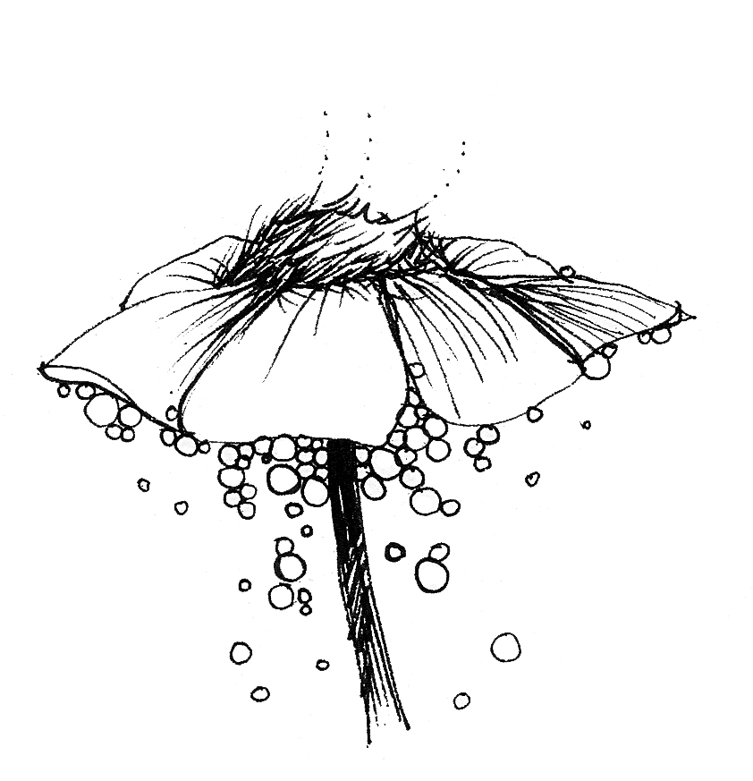 BAC drawn scribble flowers 1 1.jpg