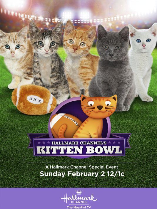 1387211048000-Kitten-Bowl.jpg