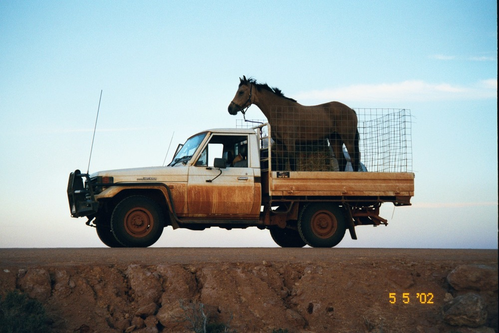 Horse on back of car.jpg