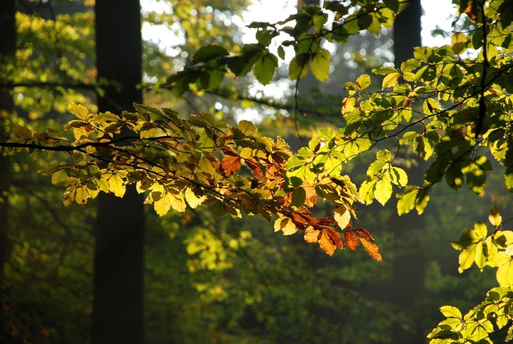 1369242_68659414 autumn.jpg