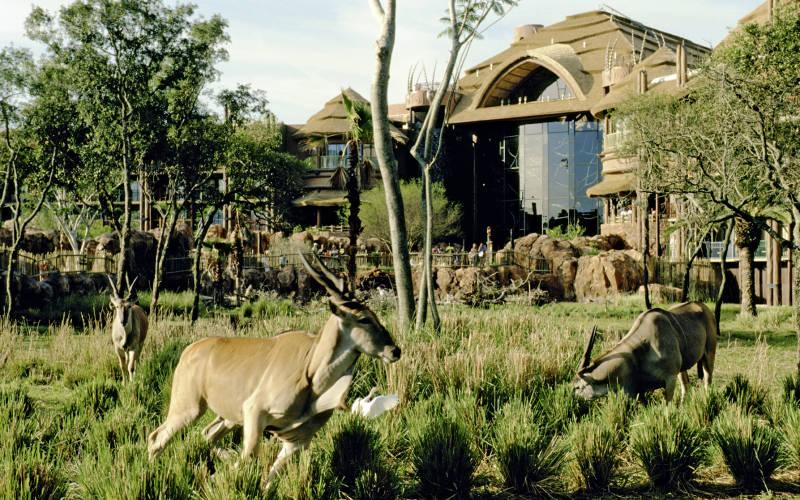 Disney-animal -kingdom-lodge-2.jpg