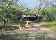 Safari-Home-page-Kruger-Mauritius.jpg