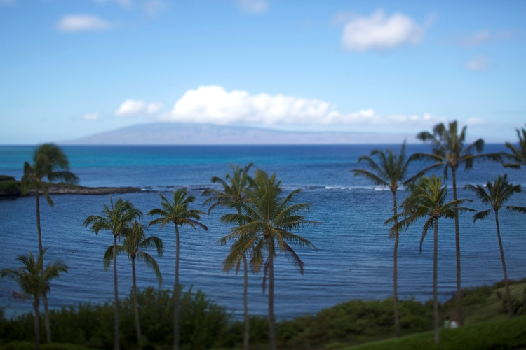 Hawaii Tourism Authority (HTA) / Max Wanger - Palms with Lanai in background. Kapalua Maui
