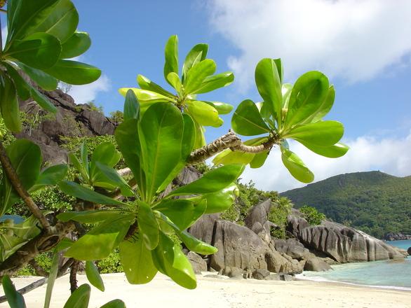 seychelles-flora-1376464.jpg