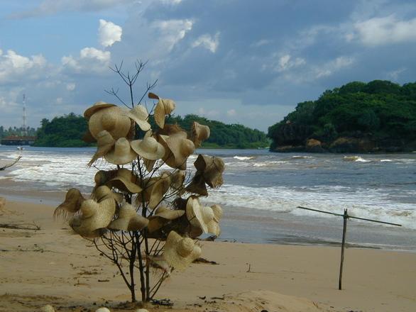 Sri Lanka hatsforsale-1439255.jpg