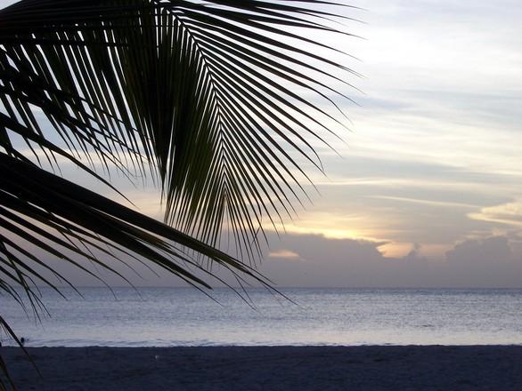 Antigua Palm Tree Sunset