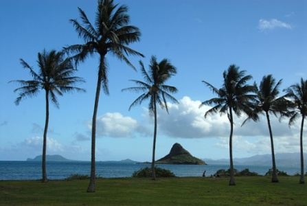 Hawaii Landscape.jpg