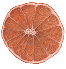 Pink Gfruit.png