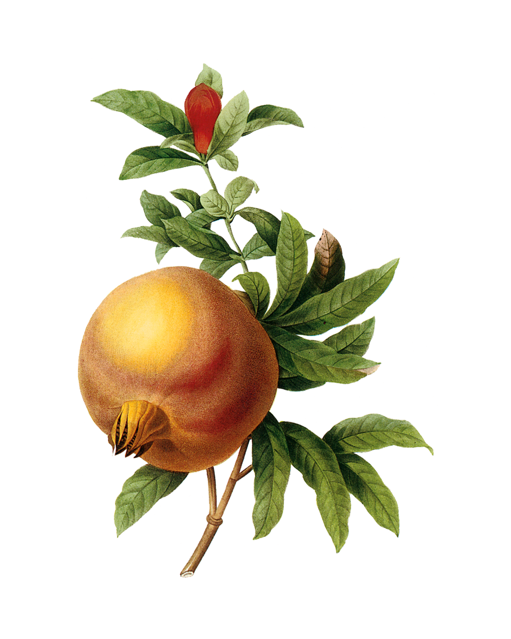 POMEGRANATEPLATE119.png