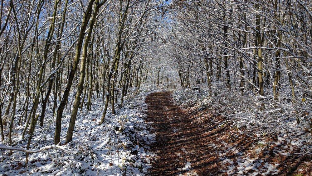 bogl.snow.jpg