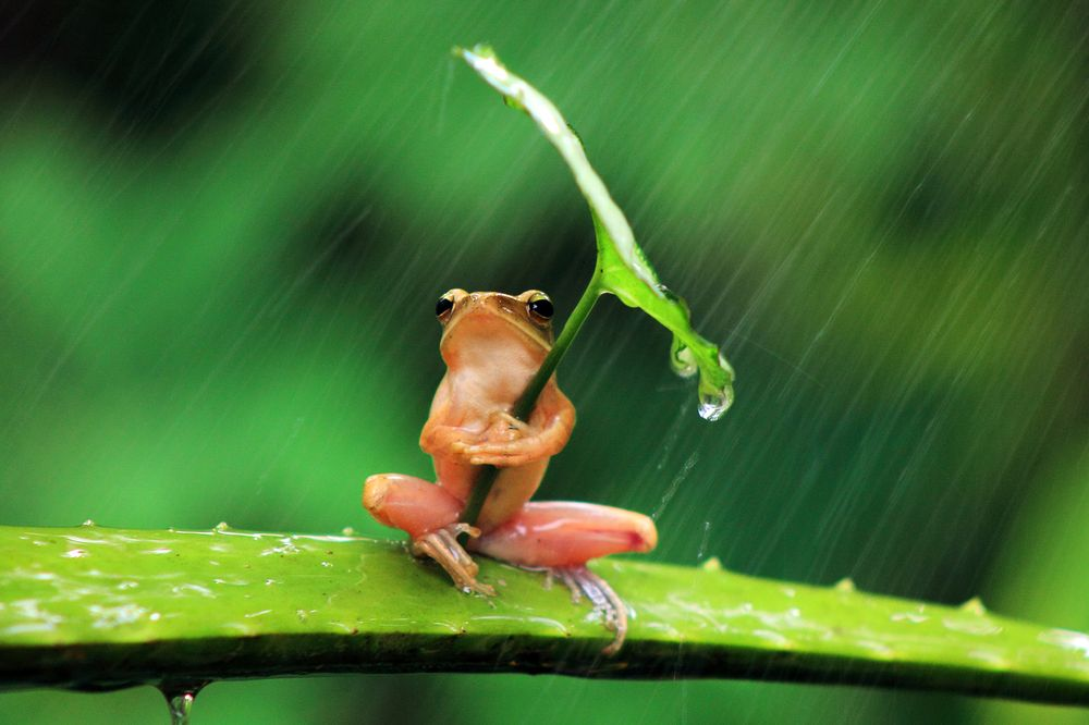 via  http://www.huffingtonpost.com/2013/07/24/frog-umbrella-photos_n_3641831.html