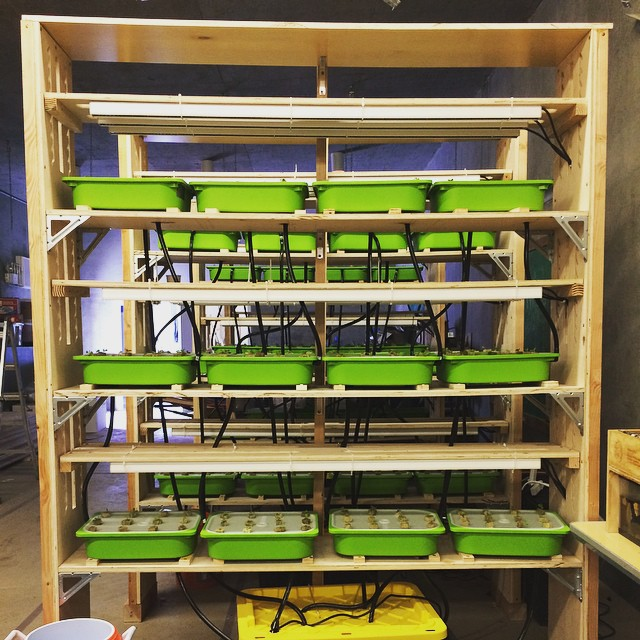 The Castlemont High School Vertical Farm is up and running!  500+ heads of Little Gem lettuce growing on 1/1000 acres using only 3 gallons of water per day?! Welcome to the future... #hydroponics #verticalfarming #urbanagriculture #droughtresistant #Oakland #sustainability #ELIOOO