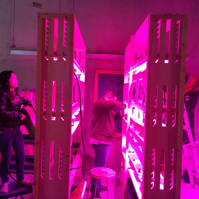 Our vertical farmers hard at work... #hydroponics #urbanagriculture #verticalfarming #oakland #learning #agtech