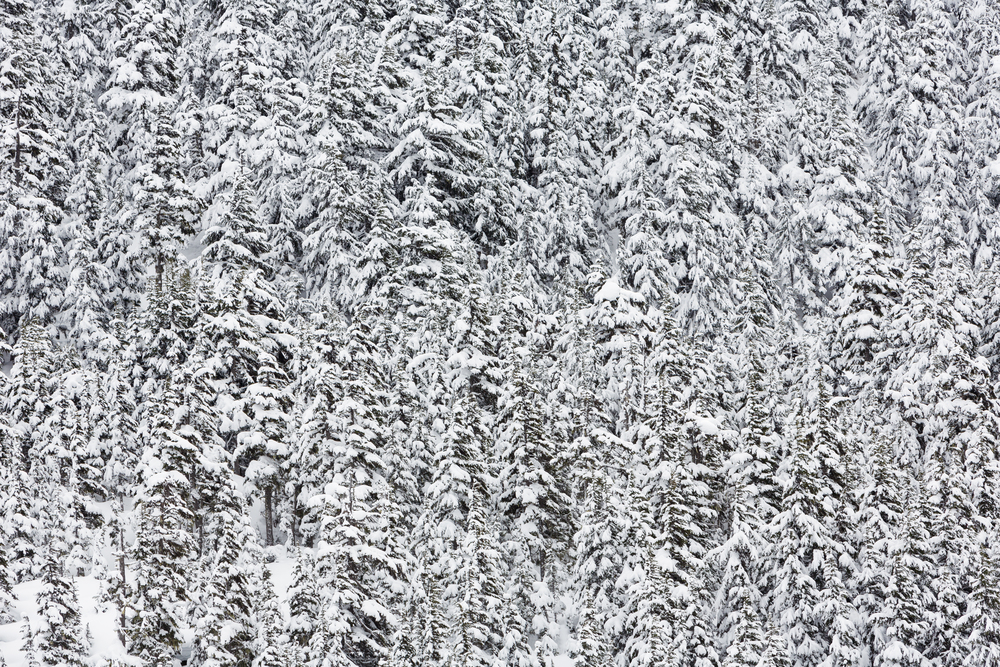 Alaska-0005.jpg