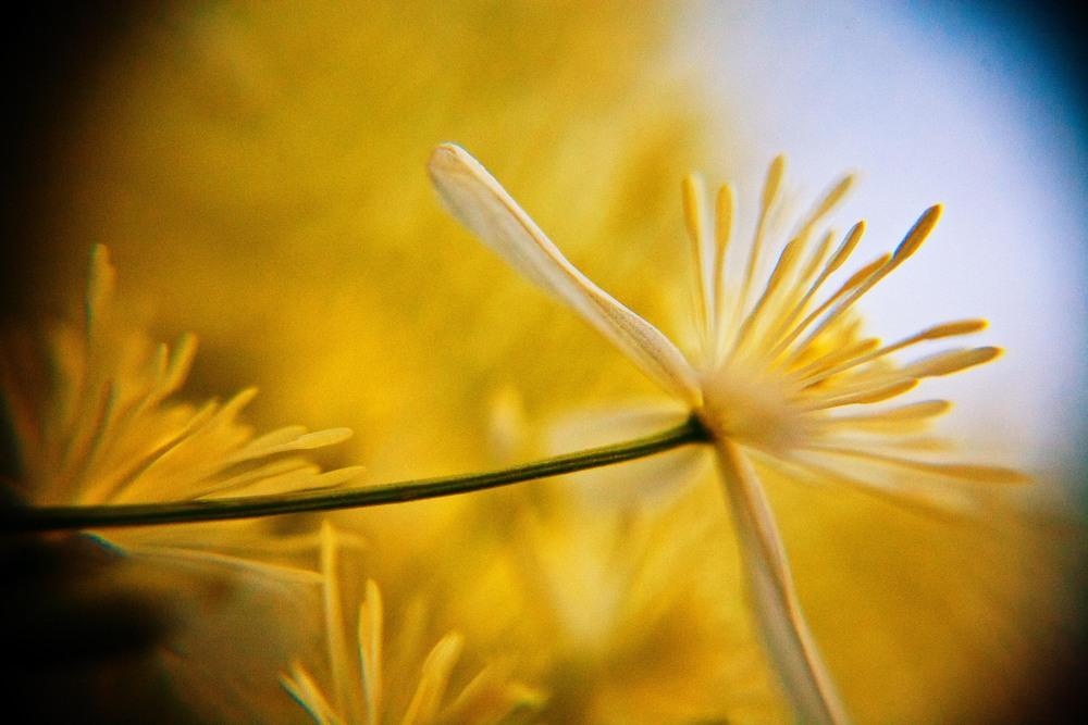 golden_hour_MG_0100.jpg