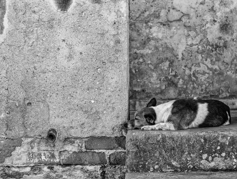 """""""Dejar dormir perros mentira"""" - Havana, Cuba"""
