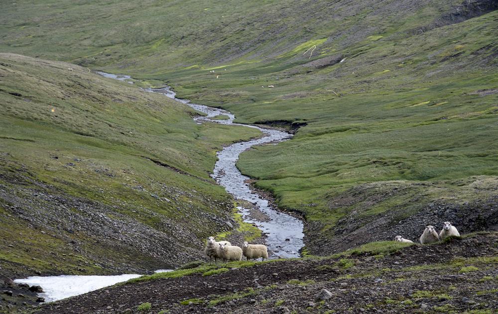 ICELAND050.jpg