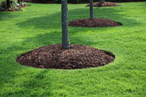 Quality mulch hugging trees