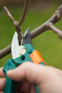 Pruning trees and bushes