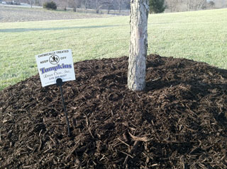 Our mulch 2 days after installation