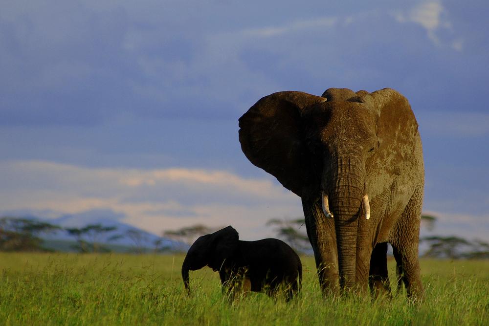 Elephant_7000.jpg