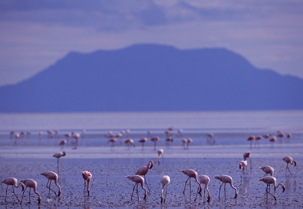L016 - Lake Natron.jpg