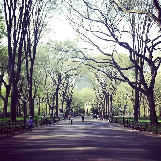 Poet's Walk, Central Park {image via randomhouse}