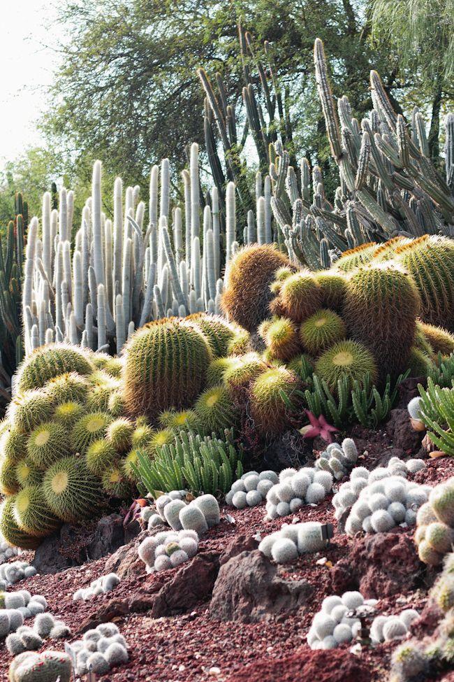 Cacti desert garden {image via forme-foryou}