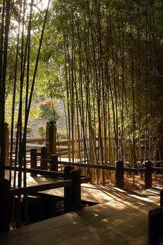 Japanese garden {image via flickr}