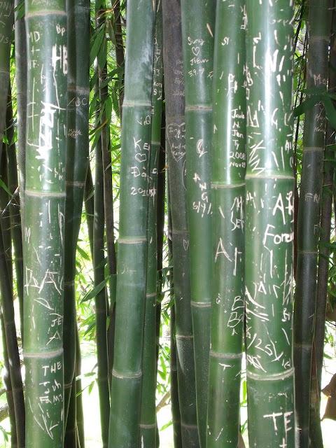 Bamboo at Huntington Gardens