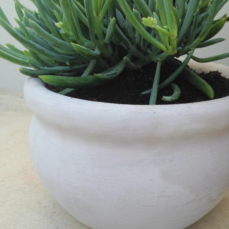 slightly garden obsessed - bauwerk white fig.JPG