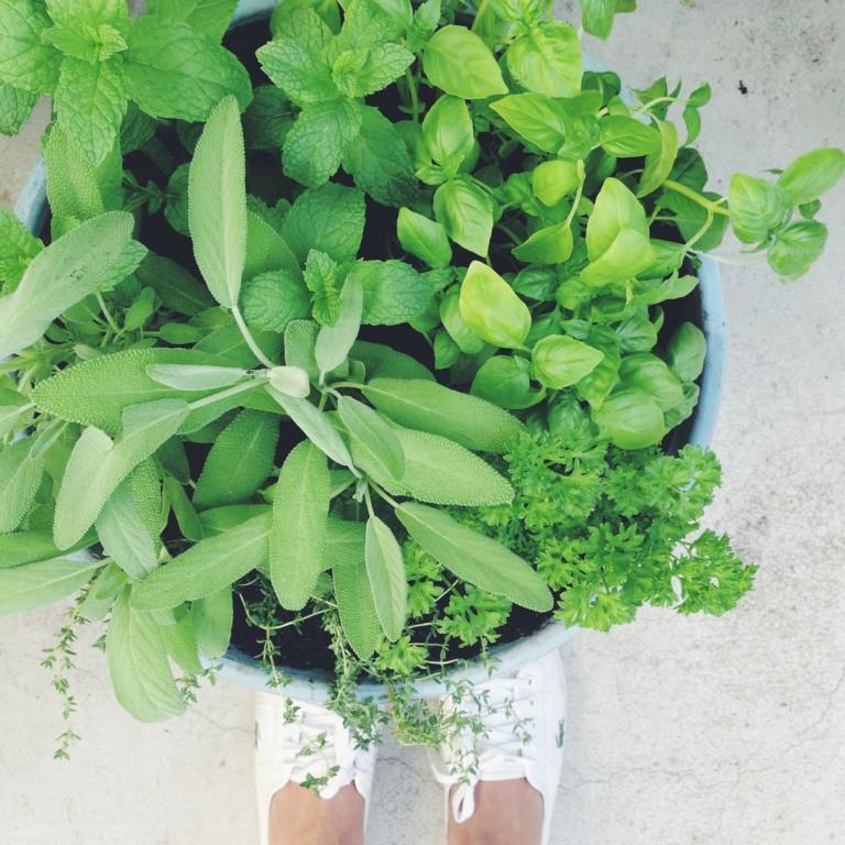 slightly garden obsessed - herbs.JPG