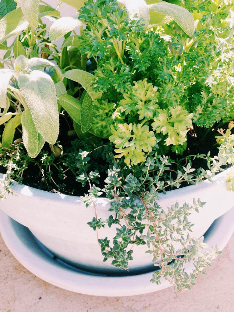 Yes, I may have packed out the pot with a few too many varieties, but I love the look of a herb bouquet♥