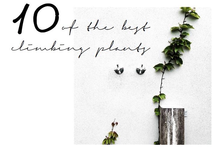 10 of the best climbing plants | Slightly Garden Obsessed.jpg