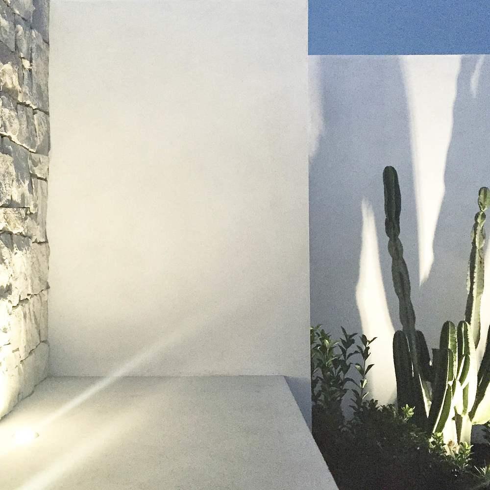 Cactus | Slightly Garden Obsessed
