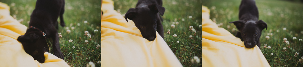 Sailing_With_Friends_Cute_Puppy-1.JPG