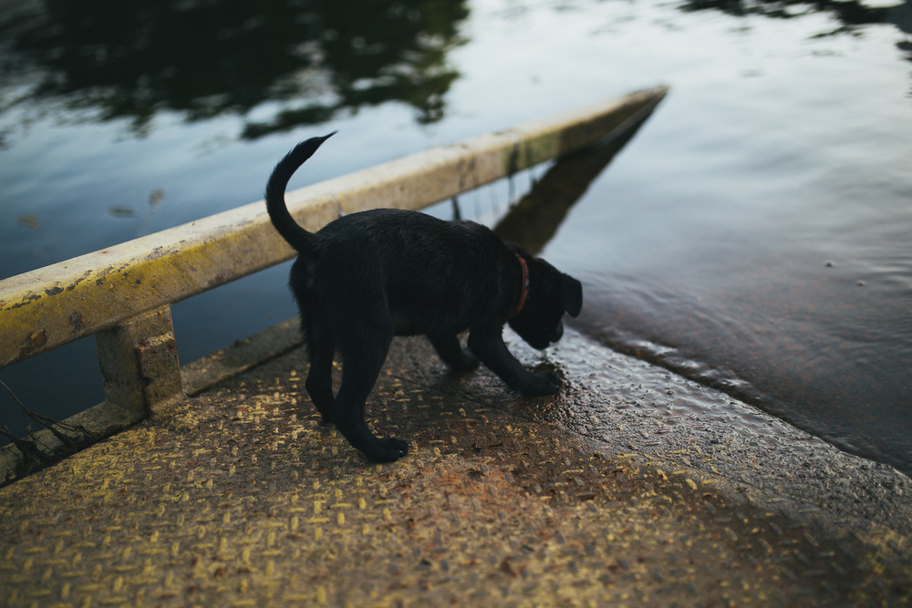 Sailing_With_Friends_Cute_Puppy-31.JPG