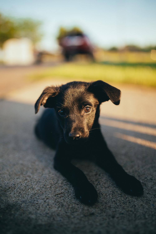 Sailing_With_Friends_Cute_Puppy-35.JPG