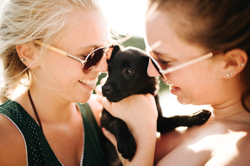 Sailing_With_Friends_Cute_Puppy_Collage-2.JPG