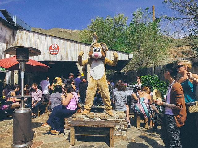 Bunny Hop 2015