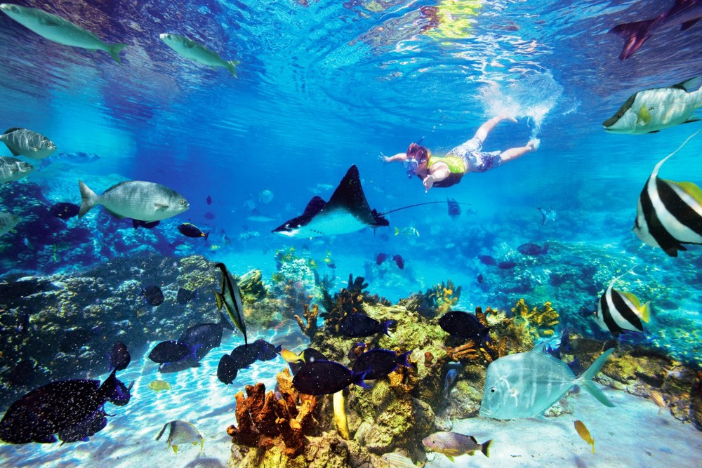 DC-Coral_Reef_Teen_Snorkel_With_Ray.jpg