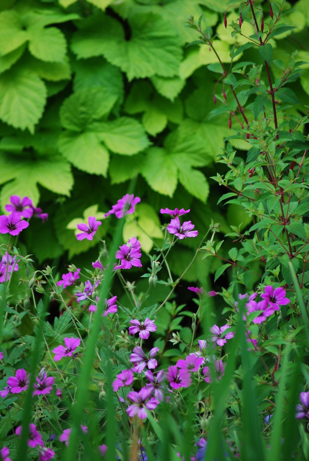 garden june 28,2014 007.JPG