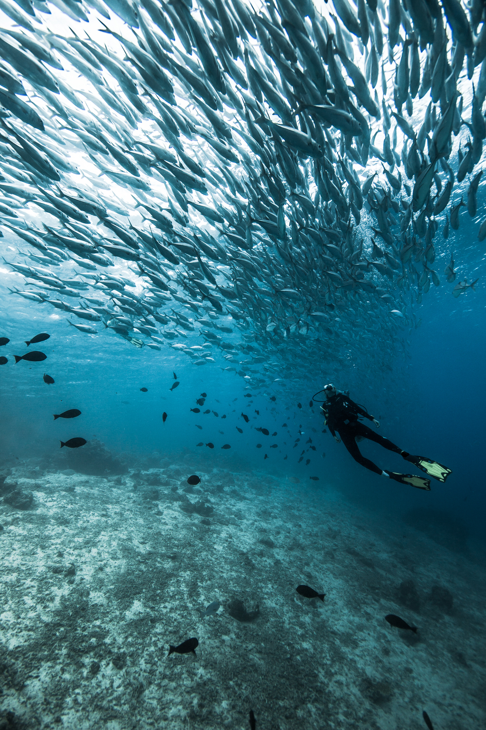 A diver is in awe of the scale at Sipadan Island