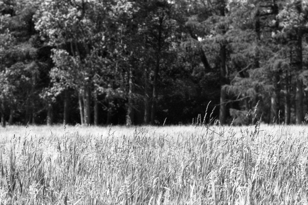 Film Scans-119.jpg