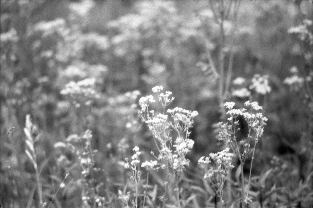Film Scans-116.jpg