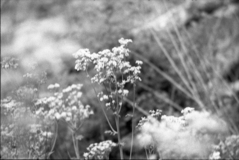 Film Scans-117.jpg