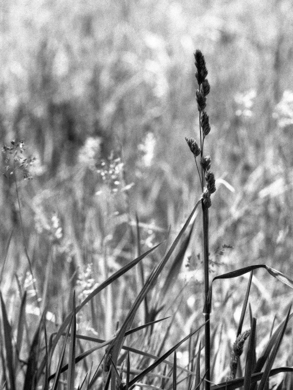 Film Scans-118.jpg