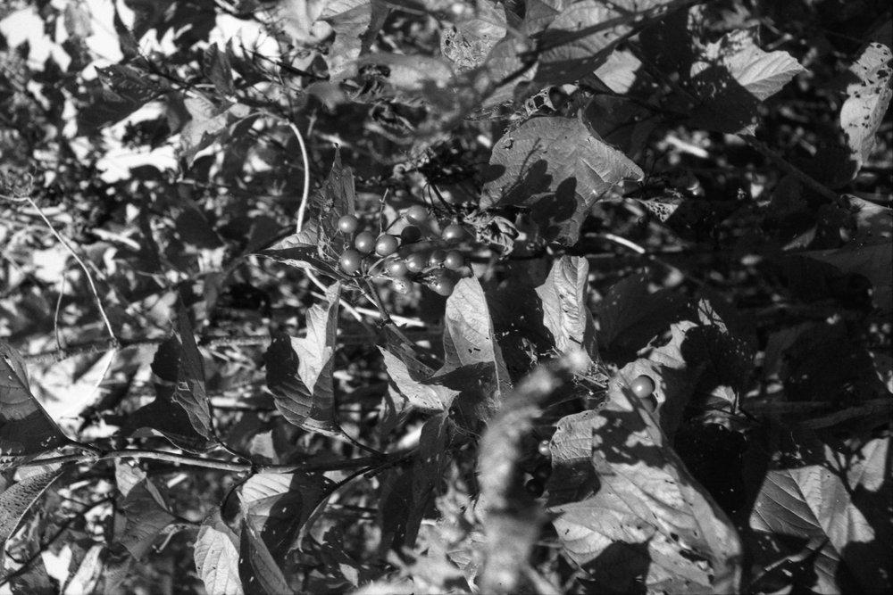 Film Scans-134.jpg